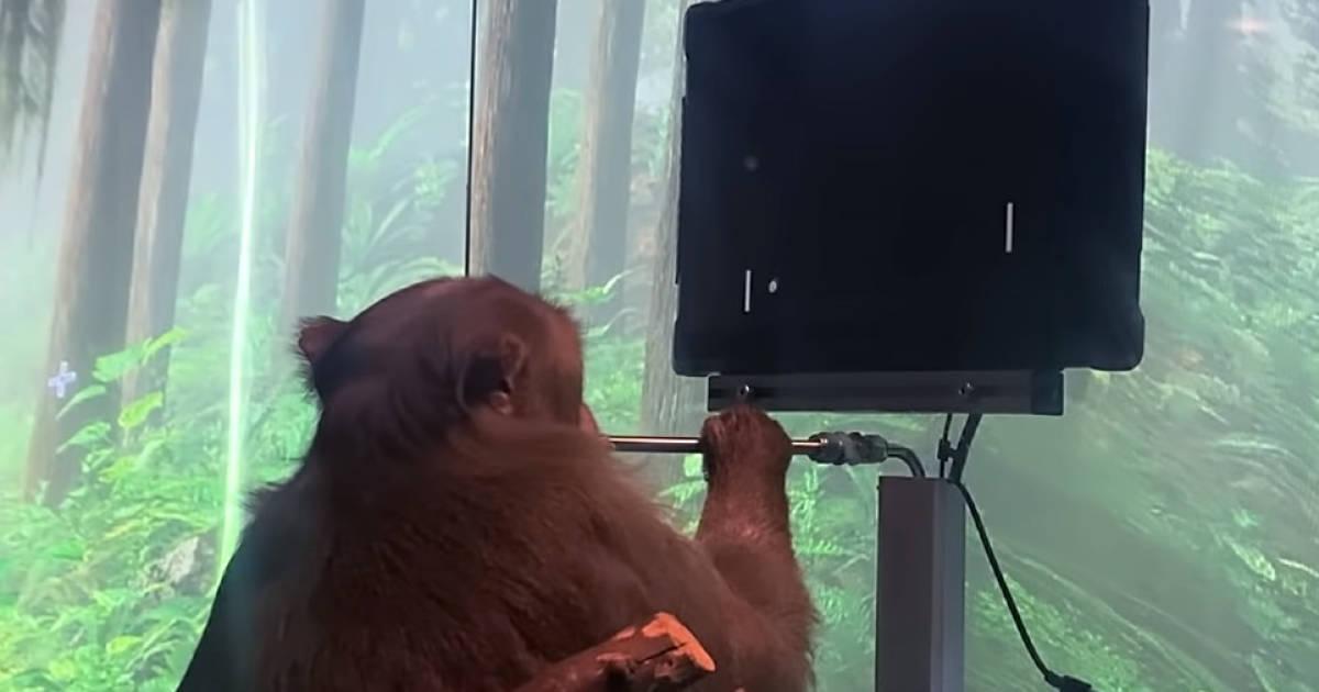 Musk-Affe-spielt-Pong-mit-seinen-Gedanken