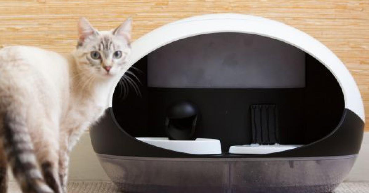 Smarter Büsi Automat setzt Katze auf Diät