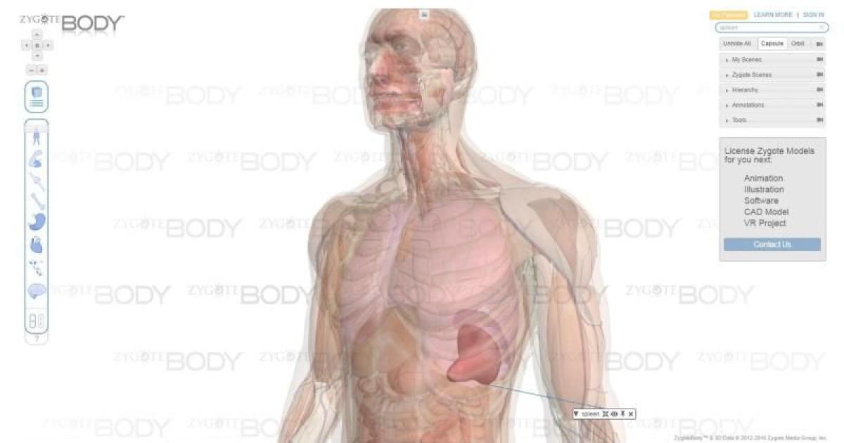Fein Anatomie Paket Antworten Galerie - Menschliche Anatomie Bilder ...